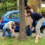Claylands Green Action Day -planting bulbs